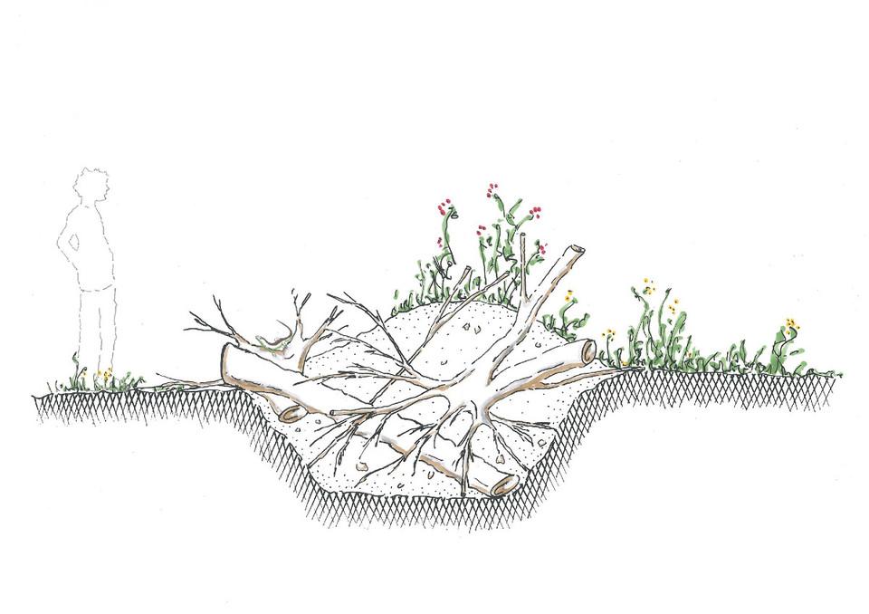 Zauneidechse Unterschlupf