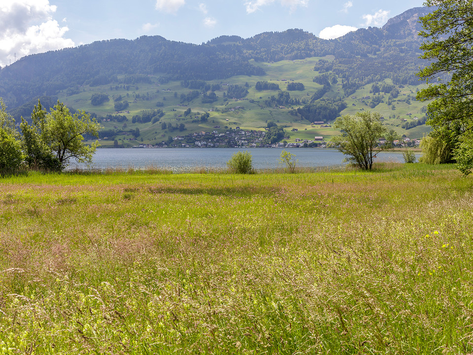 Naturschutzgebiet in Lauerz